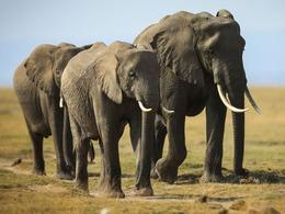 华裔教授涉嫌在美走私象牙犀牛角被捕