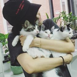 高圆圆怀抱3只宠物猫 却被网友看成赵又廷