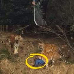 法与情:宁波老虎伤人致死案再透析